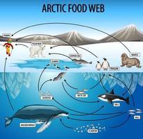 utbildning affisch av biologi för mat nät diagram