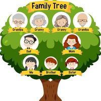 Diagramm mit Stammbaum der drei Generationen vektor