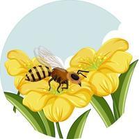 honungsbi på gul blomma på vit bakgrund vektor