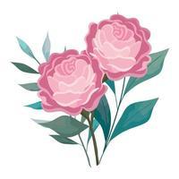 Rosen blüht rosa mit Blättern, die Vektordesign malen vektor