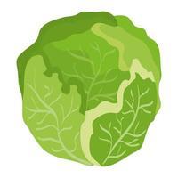 färsk kål grönsak hälsosam ikon vektor