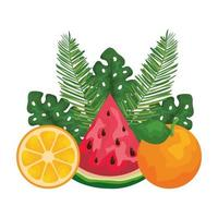 Orange und Wassermelone mit Blattpalmen vektor
