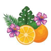 Orangen-Zitrusfrucht mit Blättern und Blüten vektor