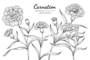 nejlika blomma och blad handritad botanisk illustration med konturteckningar på vit bakgrund vektor