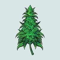 medicinsk cannabisbladväxt vektor