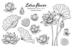 uppsättning lotusblomma och blad handritad botanisk illustration med konturteckningar på vita bakgrunder vektor