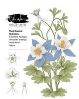 Columbine blomma handritade botaniska illustrationer. vektor