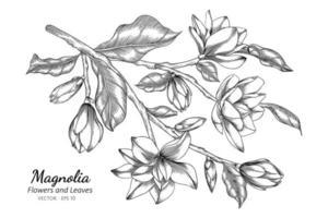 Magnolienblumen- und Blattzeichnungsillustration mit Strichzeichnungen auf weißem Hintergrund vektor