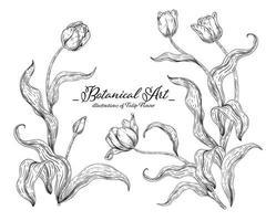 tulpanblomma handritade botaniska illustrationer. vektor