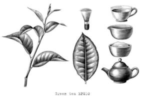 Grüntee-Sammlungshandzeichnung Gravurart Schwarzweiss-Kunst lokalisiert auf weißem Hintergrund vektor