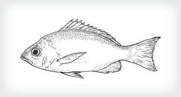 schwarze Linie Kunstillustration von schuppigem Fisch vektor