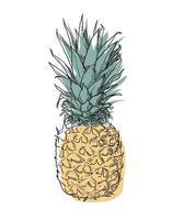 handgezeichnete Ananas vektor
