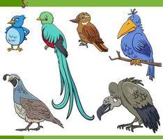 tecknade fåglar arter djur tecken set vektor