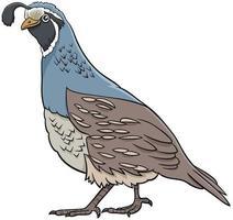 tecknad vaktel fågel komisk djur karaktär vektor