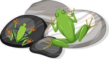 ovanifrån av exotiska gröna grodor på stenblad isolerade vektor