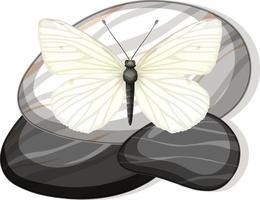 ovanifrån av fjäril på en sten på vit bakgrund