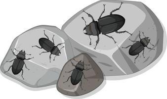 ovanifrån av många hjortbaggar på stenar