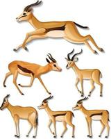 uppsättning av olika sidor av impala isolerad på vit bakgrund