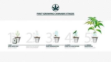 stadier av cannabisfrögroning från utsäde till grodd, växtsäsongen för cannabis, första växande cannabisstadier, guide för odling av cannabis vektor