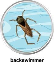 ovanifrån av backswimmer på vattnet vektor