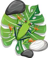 ovanifrån av en grön groda på monstera blad isolerad vektor
