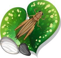 ovanifrån av gräshoppa på ett isolerat blad