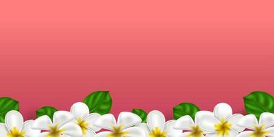 Vektor realistische tropische Hawaii Blume Plumeria. weiß-gelbe Farbe Frangipani auf einem korallenfarbenen Hintergrund. Sommerparadies. botanische Naturillustration für Banner und Karten. Blumenrahmen