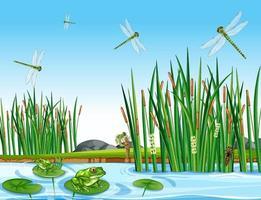många gröna grodor och slända i dammscenen