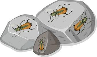 ovanifrån av många malachius aeneus insekter på stenar