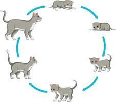 Katzenwachstumsstufe auf weißem Hintergrund eingestellt