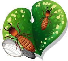 ovanifrån av termit på ett isolerat blad