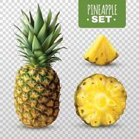 realistisk ananasuppsättning vektor