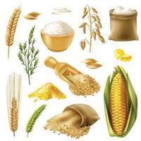 Getreide Set Weizen Reis Gerste Hafer Mais vektor
