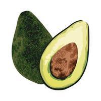 frische Avocados-Ikone vektor