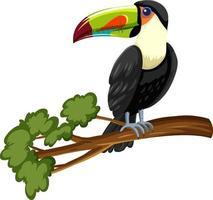 toucan fågel på en gren isolerad på vit bakgrund vektor