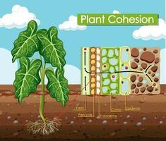 Diagramm, das den Pflanzenzusammenhalt zeigt vektor