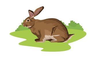 niedliches wildes Kaninchen Tier auf dem Feld vektor