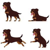 Rottweiler in verschiedenen Posen. vektor
