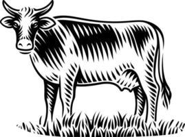 Schwarzweiss-Vektorillustration der Kuh im Gravurstil auf weißem Hintergrund vektor