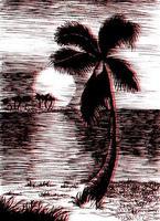 tropische Sommerillustration des Vektors mit Palme vektor