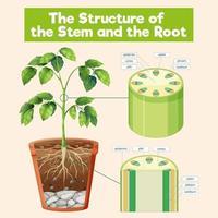 stammens och rotens struktur vektor