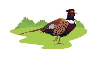 wildes Fasanenvogeltier auf dem Feld vektor