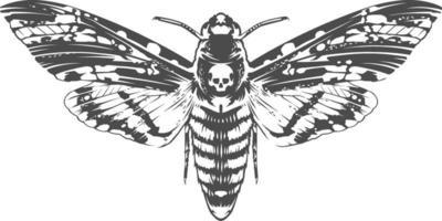 Vektor Gravur Insekt