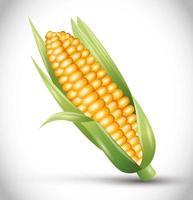 mogen majskolv med löv, majsörat, färsk grönsak vektor