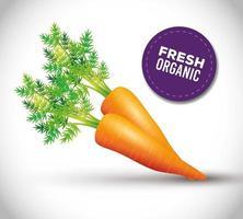 gesunde Karotte, frisches Gemüse aus biologischem Anbau vektor