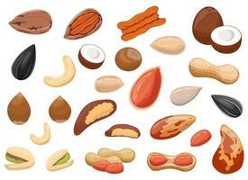 Nüsse und Erdnüsse setzen Vektordesign-Illustrationssatz lokalisiert auf weißem Hintergrund vektor