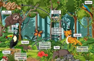 Diagramm zeigt das Nahrungsnetz im Regenwald vektor