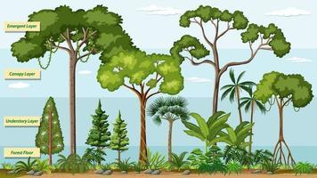 lager av en regnskog med namn