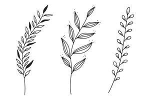 Satz von handgezeichneten Vektorweinleseelementen, Zweigen und Blättern. vektor