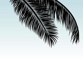 Kokosnussblätter mit tropischem Sommerhintergrundvektorillustration des Kopienraums